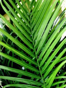 Tuesday Lectionary Leanings: Palm Sunday Edition