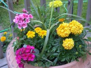 06549-flowers1