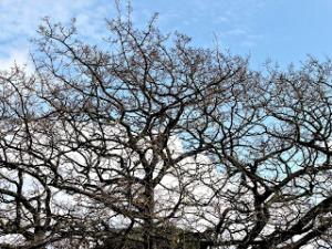 9a347-treetangle