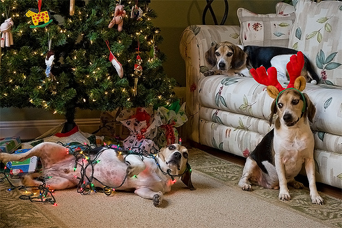 beagle-wrapped-in-christmas-lights