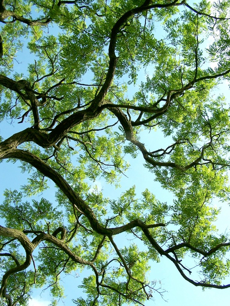 leafy tree