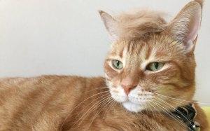 #trumpyourcat (just because).