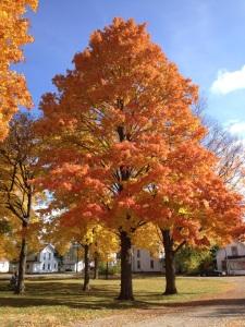 fall nankin 2