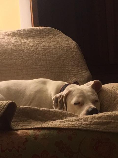 zeke sleeping