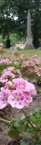cemetery-flowers