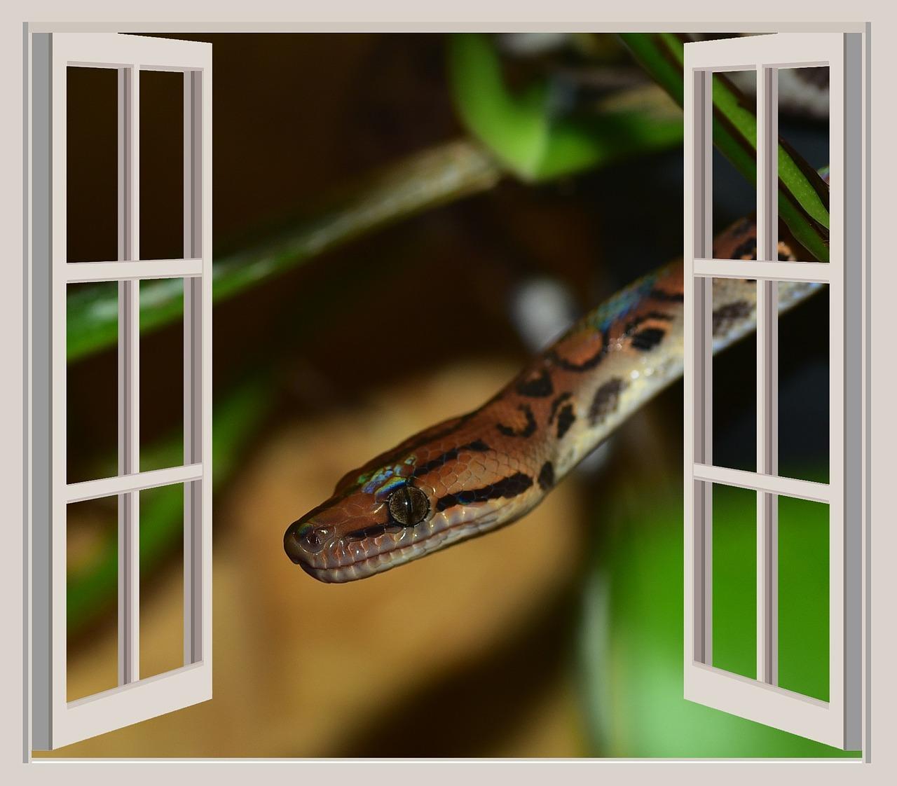 snake-832146_1280
