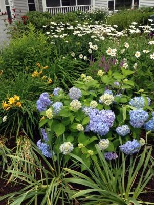 Seabury garden