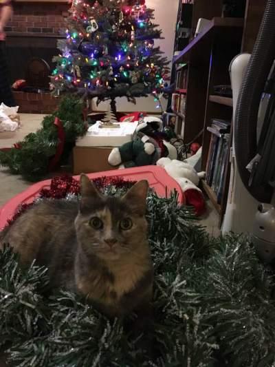Christina christmas