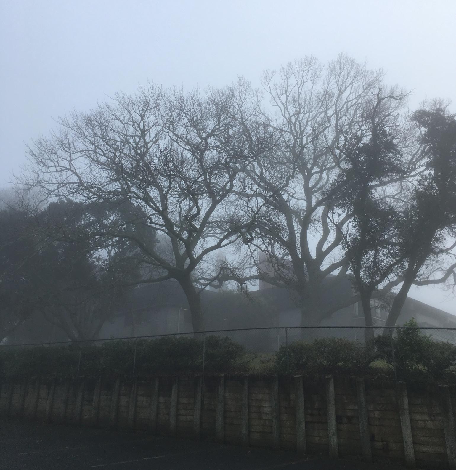 All Saints fog