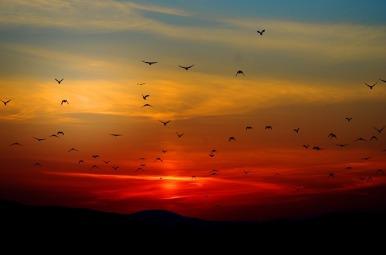 sunset-100367_640