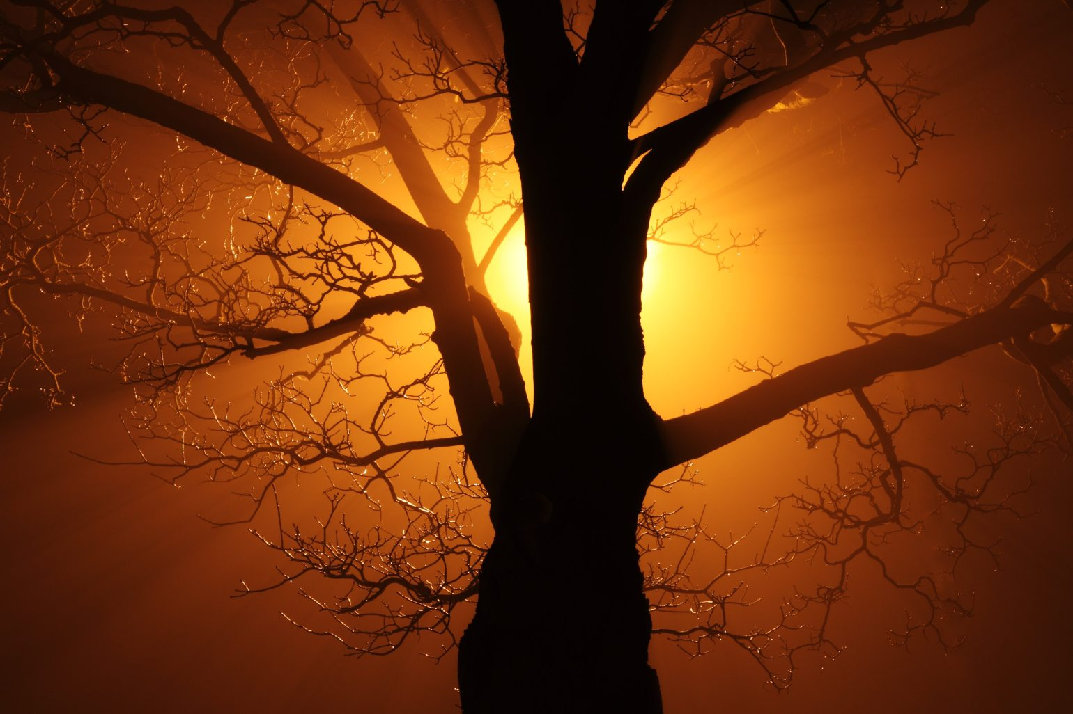 branches-silhouette-sunrise-87424