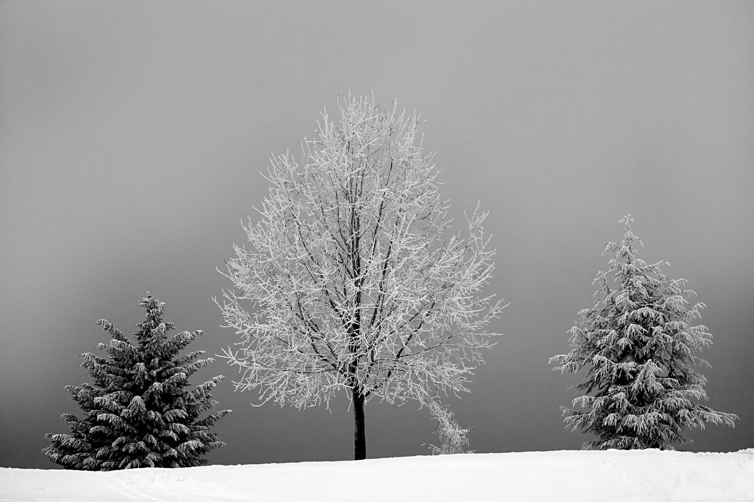 black-and-white-branch-cold-730614