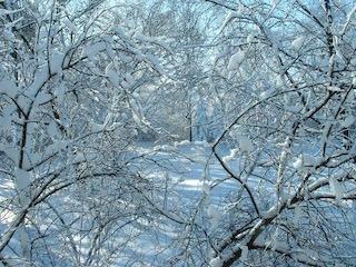 snow on trees web