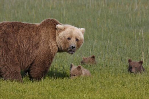 bears-3834385_1920