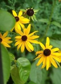 BOS flower