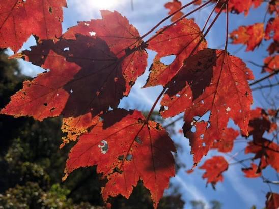 leaves by Lisa