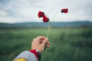 person-holding-red-petaled-flowers-1876585