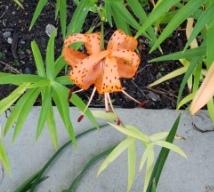 introspective flower