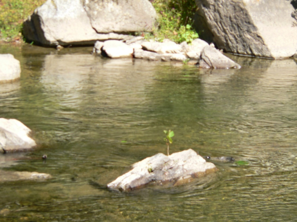 A small tree growing in a  rock in the middle of  a stream