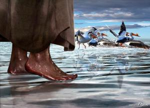 walk-on-water-bill-stephens